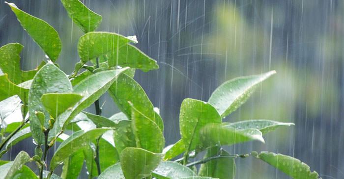 雨降りのイメージ画像